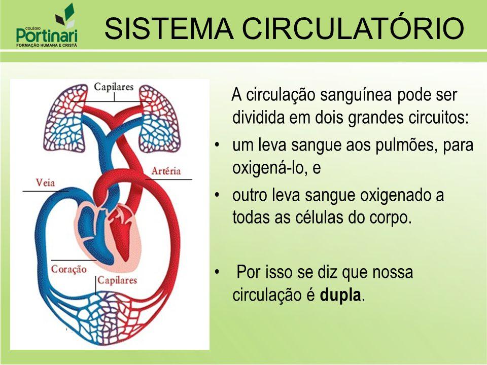 SISTEMA CIRCULATÓRIO A circulação sanguínea pode ser dividida em dois grandes circuitos: um leva sangue aos pulmões, para oxigená-lo, e.