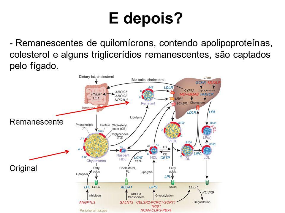 E depois Remanescentes de quilomícrons, contendo apolipoproteínas, colesterol e alguns triglicerídios remanescentes, são captados pelo fígado.
