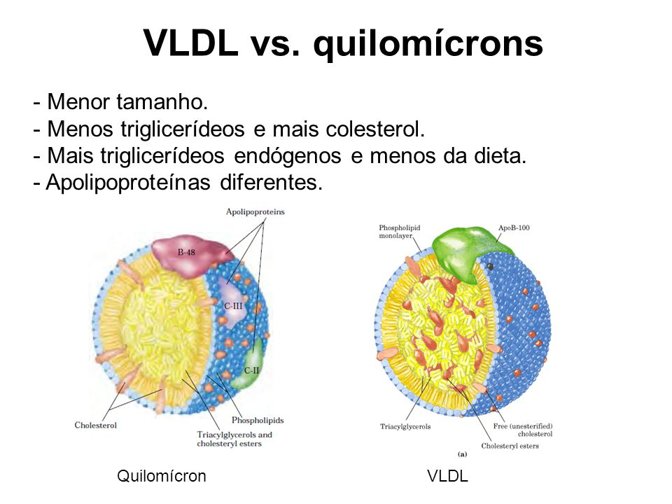 VLDL vs. quilomícrons Menor tamanho.
