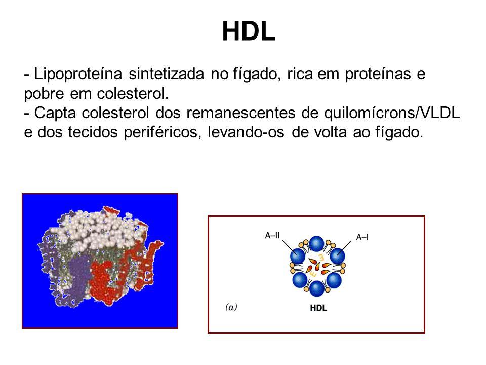 HDL Lipoproteína sintetizada no fígado, rica em proteínas e pobre em colesterol.