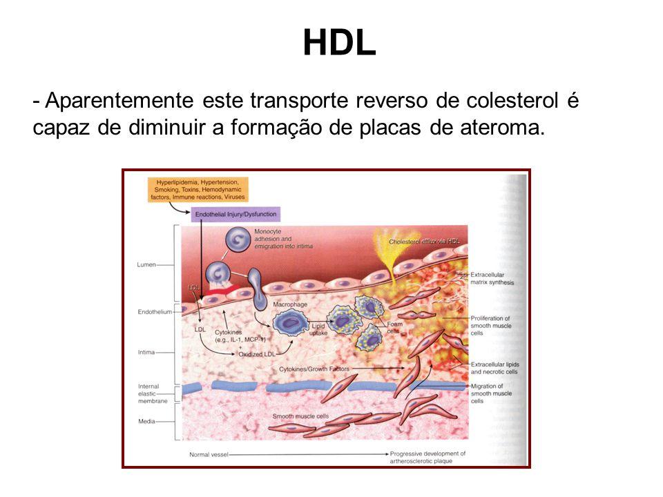 HDL Aparentemente este transporte reverso de colesterol é capaz de diminuir a formação de placas de ateroma.