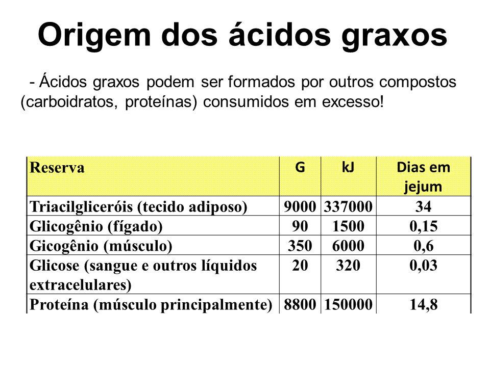 Origem dos ácidos graxos
