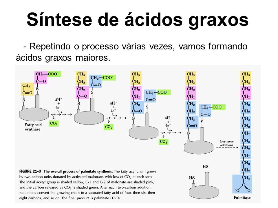 Síntese de ácidos graxos