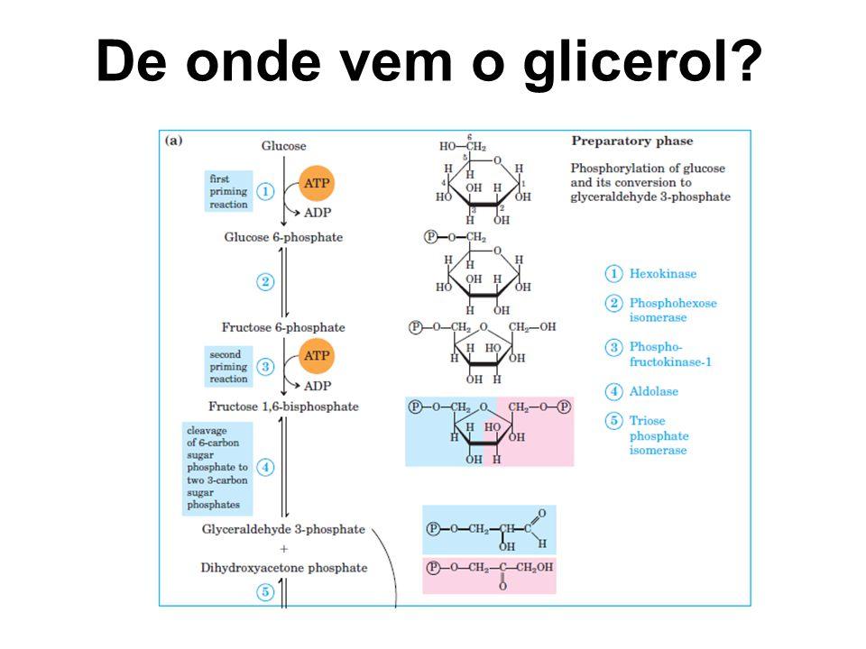 De onde vem o glicerol