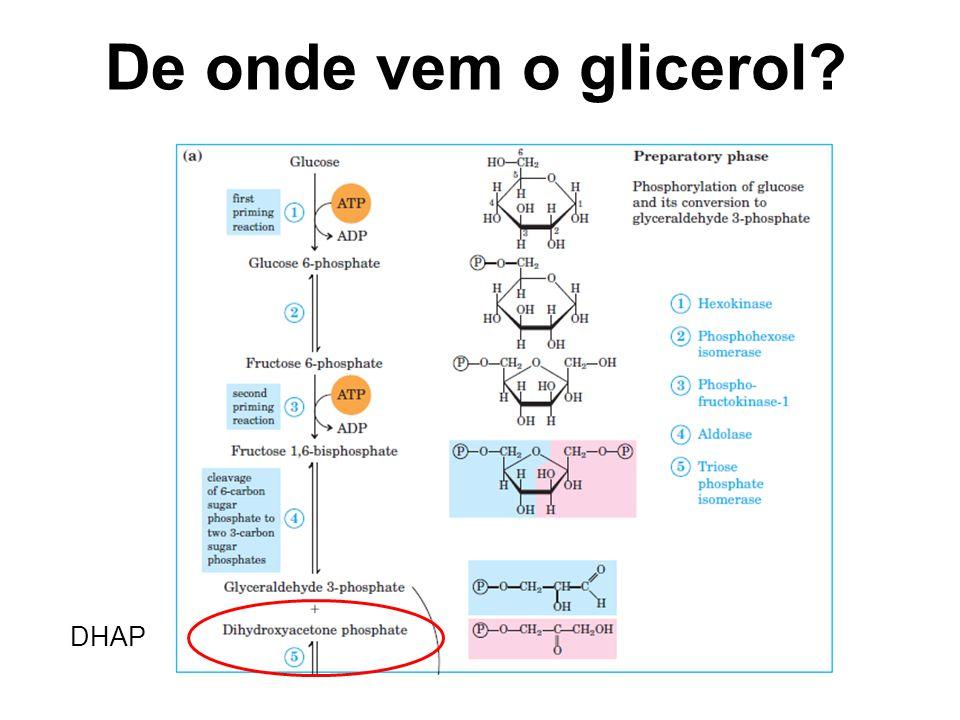 De onde vem o glicerol DHAP