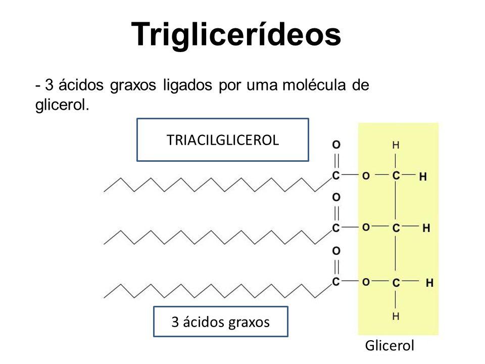 Triglicerídeos - 3 ácidos graxos ligados por uma molécula de glicerol.