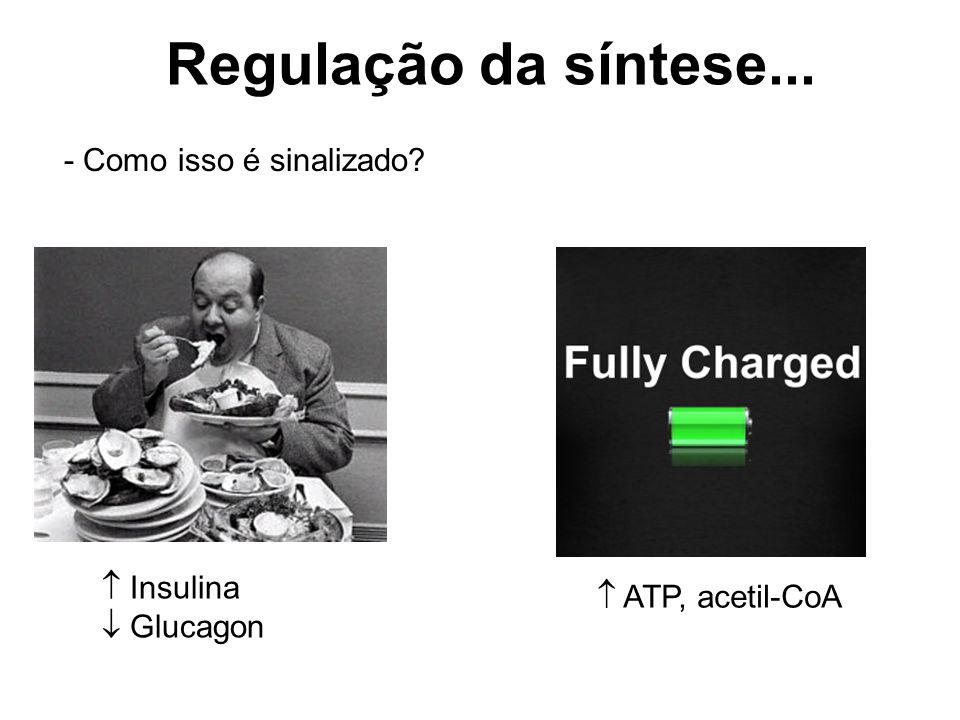 Regulação da síntese... - Como isso é sinalizado  Insulina