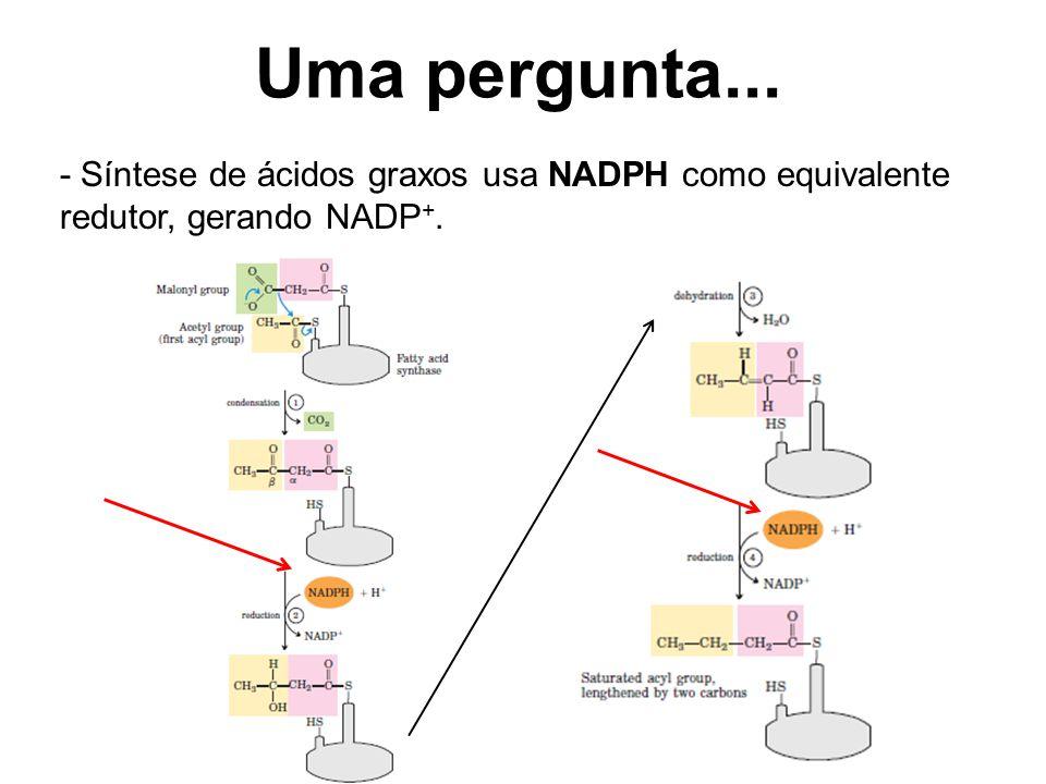 Uma pergunta... - Síntese de ácidos graxos usa NADPH como equivalente redutor, gerando NADP+.