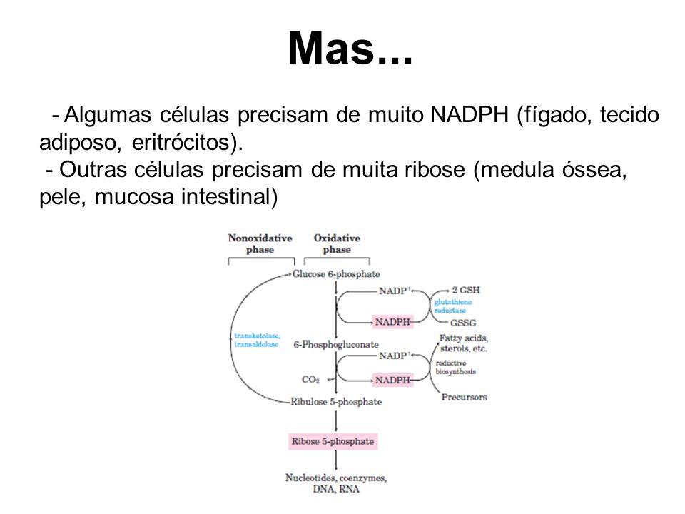 Mas... - Algumas células precisam de muito NADPH (fígado, tecido adiposo, eritrócitos).