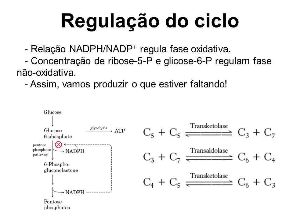 Regulação do ciclo - Relação NADPH/NADP+ regula fase oxidativa.