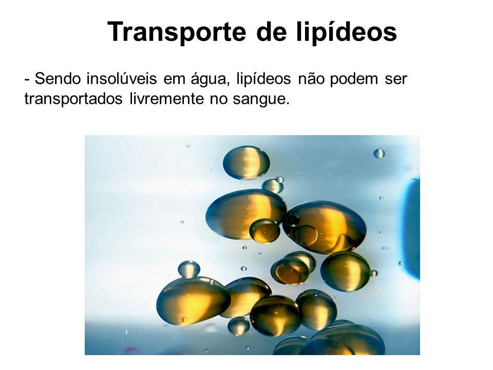 Transporte de lipídeos