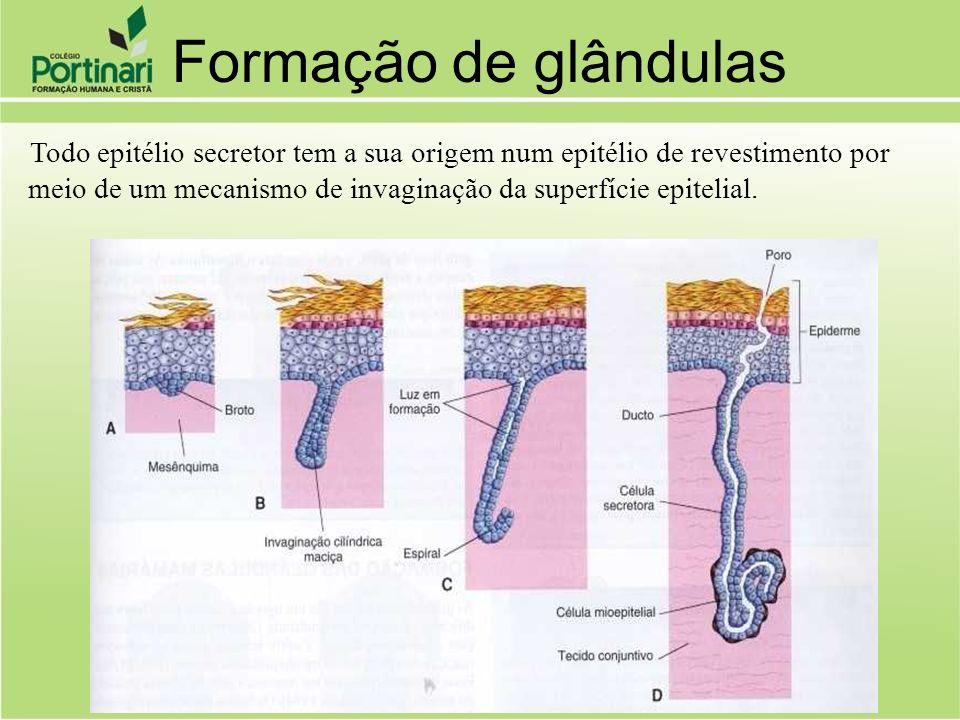 meio de um mecanismo de invaginação da superfície epitelial.