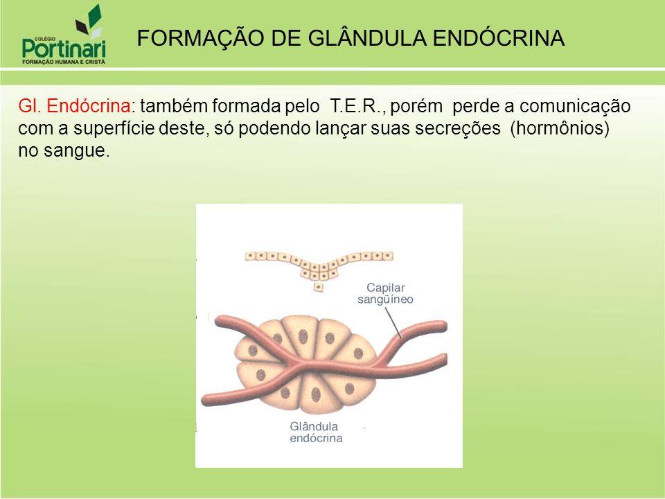FORMAÇÃO DE GLÂNDULA ENDÓCRINA