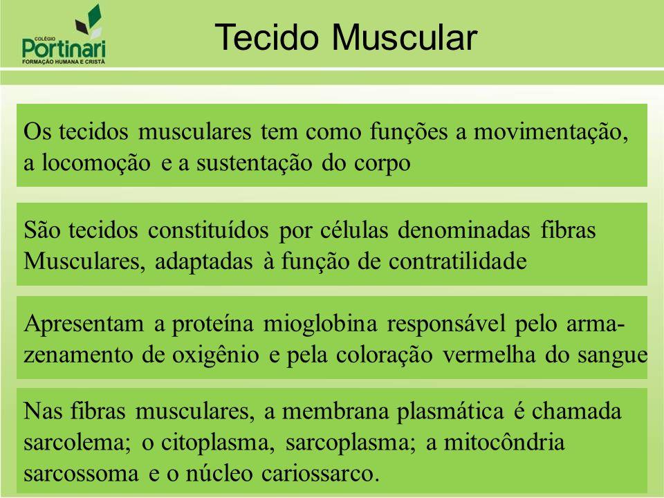 Tecido Muscular Os tecidos musculares tem como funções a movimentação,