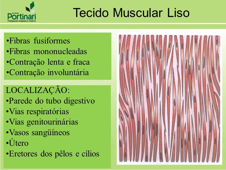 Tecido Muscular Liso Fibras fusiformes Fibras mononucleadas