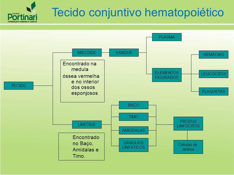 Tecido conjuntivo hematopoiético