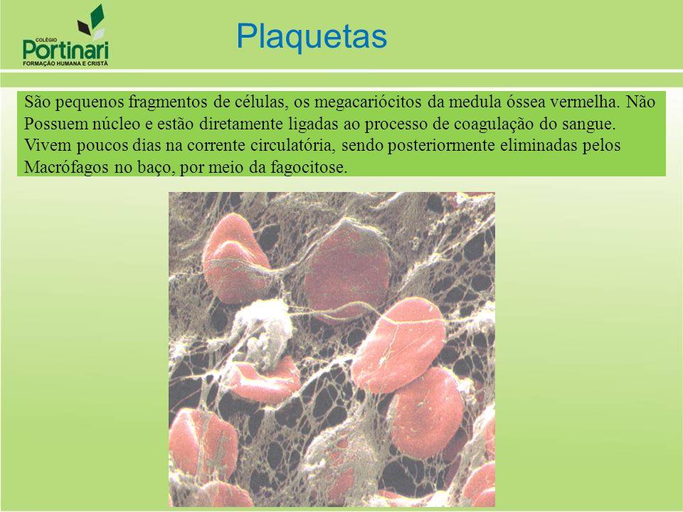 Plaquetas São pequenos fragmentos de células, os megacariócitos da medula óssea vermelha. Não.