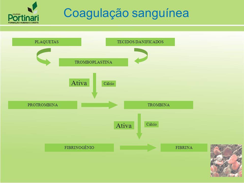 Coagulação sanguínea Ativa Ativa TECIDOS DANIFICADOS PLAQUETAS