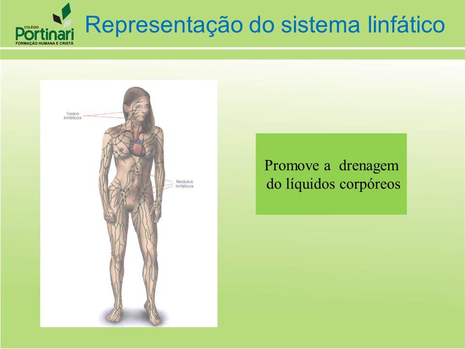 Representação do sistema linfático