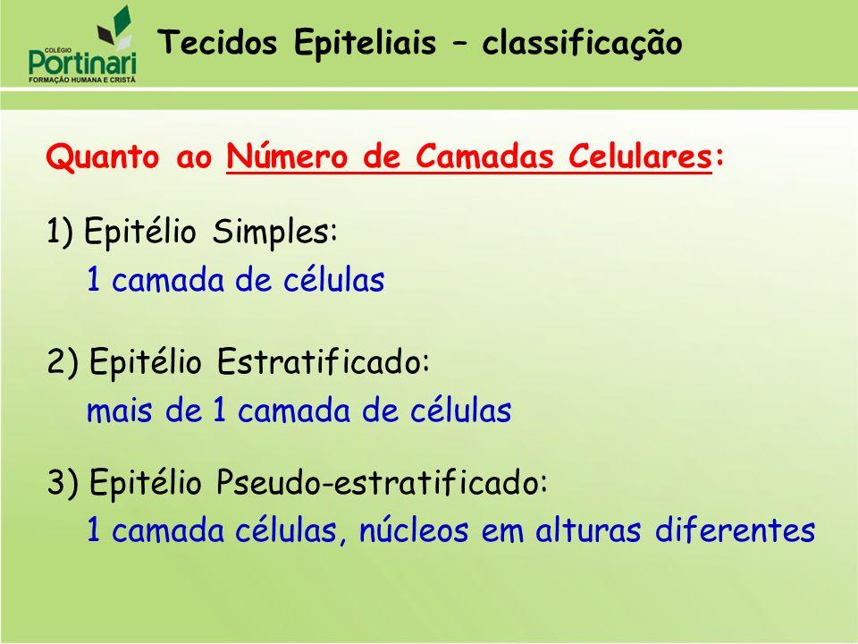 Tecidos Epiteliais – classificação