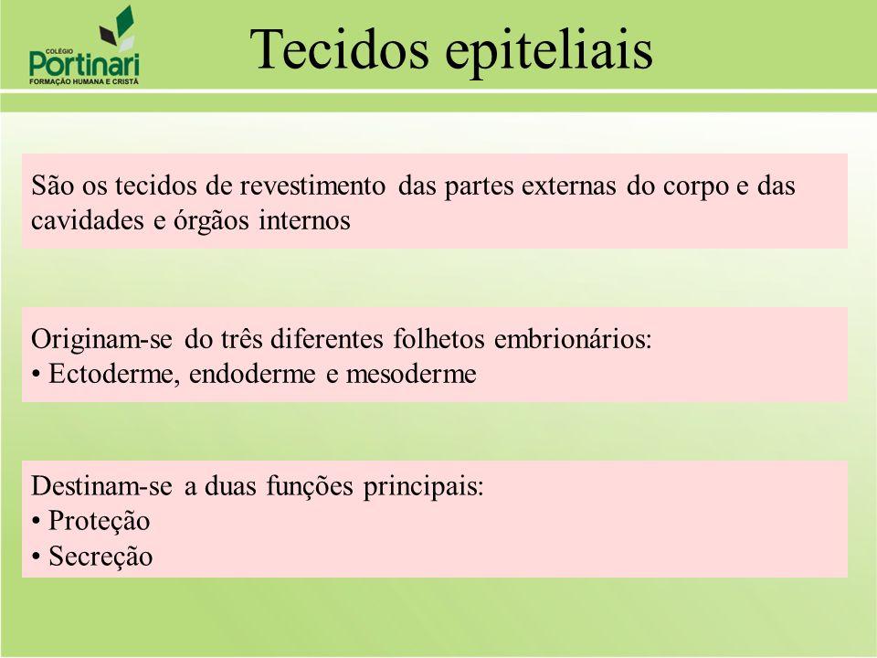 Tecidos epiteliais São os tecidos de revestimento das partes externas do corpo e das. cavidades e órgãos internos.