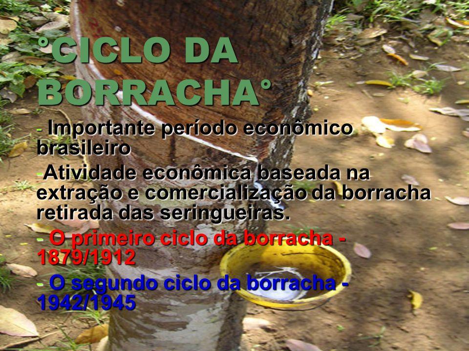 °CICLO DA BORRACHA° Importante período econômico brasileiro.