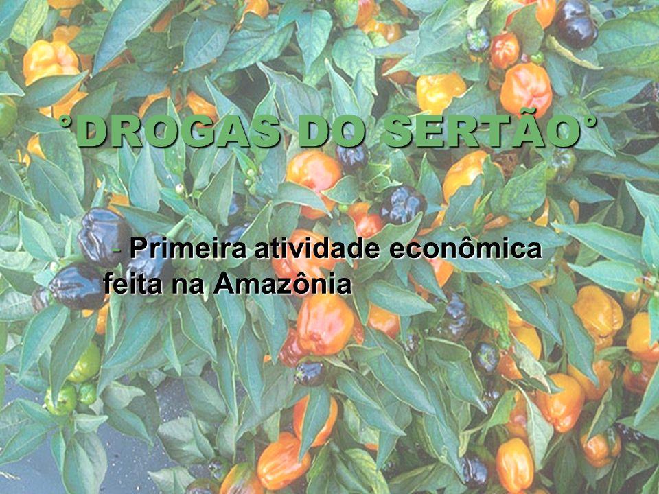 - Primeira atividade econômica feita na Amazônia