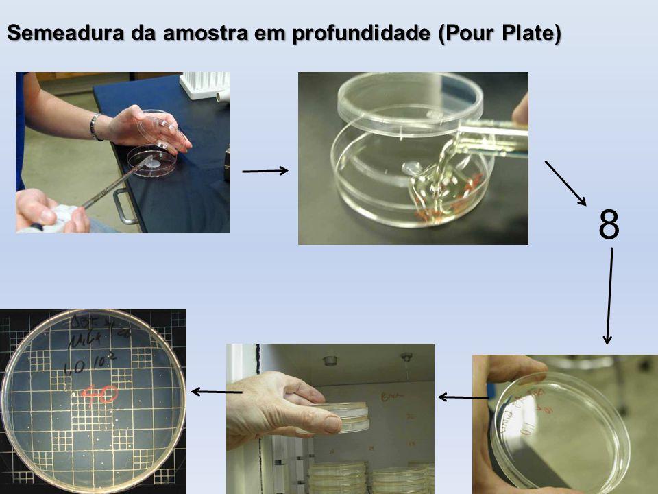 Semeadura da amostra em profundidade (Pour Plate)