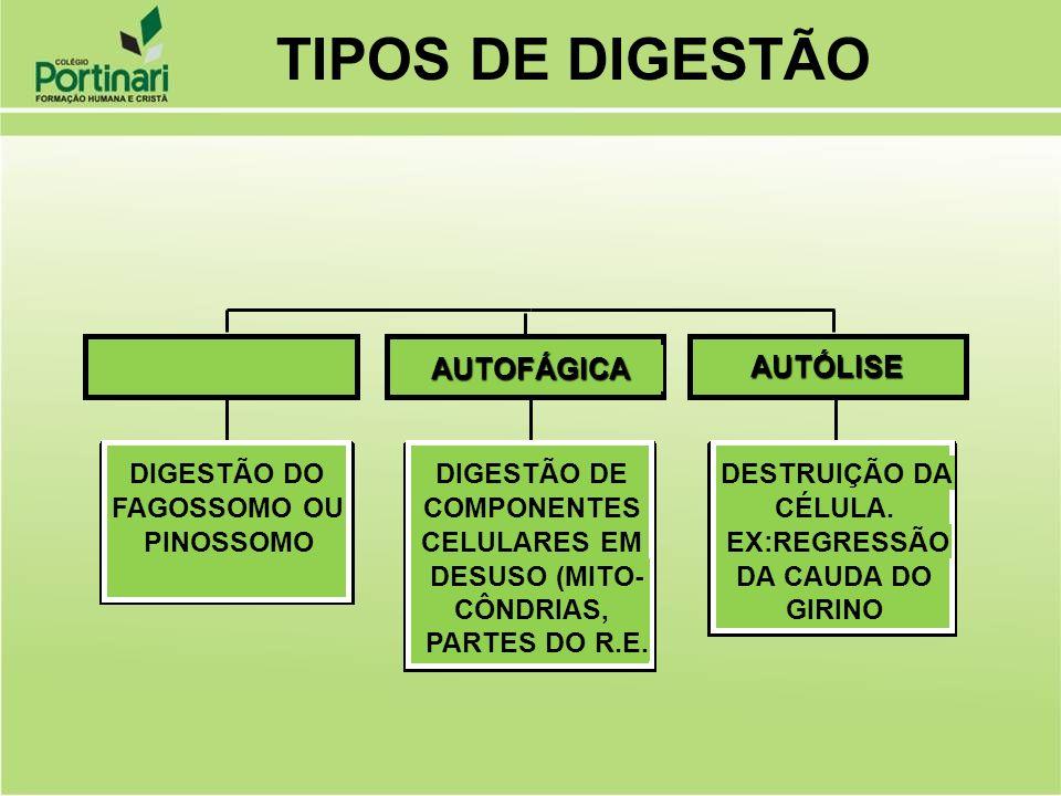 TIPOS DE DIGESTÃO HETEROFÁGICA AUTOFÁGICA AUTÓLISE DIGESTÃO DO