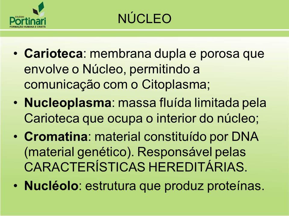 NÚCLEO Carioteca: membrana dupla e porosa que envolve o Núcleo, permitindo a comunicação com o Citoplasma;