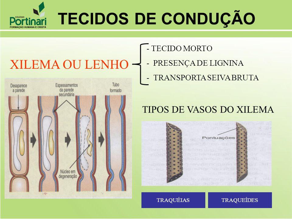 TECIDOS DE CONDUÇÃO XILEMA OU LENHO TIPOS DE VASOS DO XILEMA