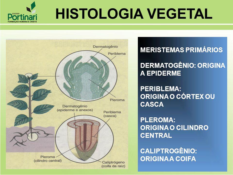 HISTOLOGIA VEGETAL MERISTEMAS PRIMÁRIOS