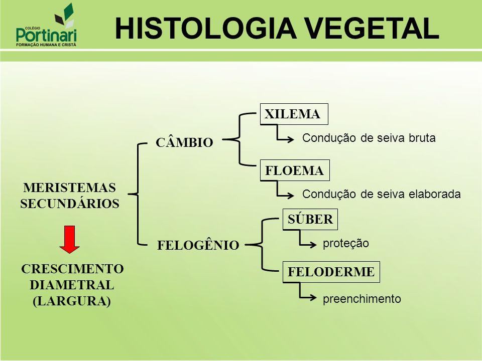 HISTOLOGIA VEGETAL XILEMA CÂMBIO FLOEMA MERISTEMAS SECUNDÁRIOS SÚBER