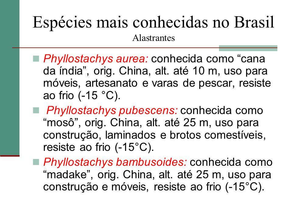 Espécies mais conhecidas no Brasil Alastrantes