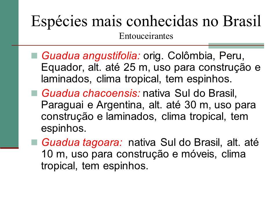 Espécies mais conhecidas no Brasil Entouceirantes