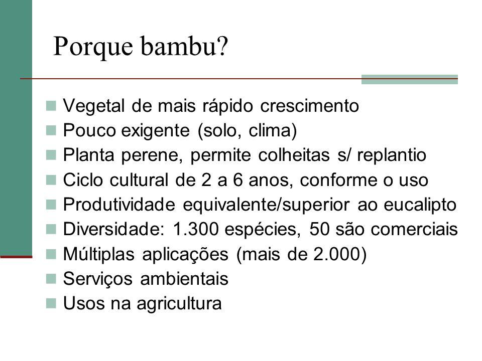 Porque bambu Vegetal de mais rápido crescimento