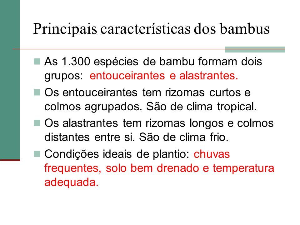 Principais características dos bambus
