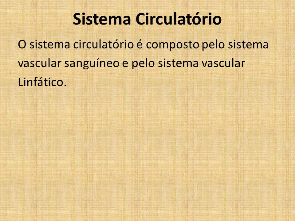 Sistema Circulatório O sistema circulatório é composto pelo sistema vascular sanguíneo e pelo sistema vascular Linfático.