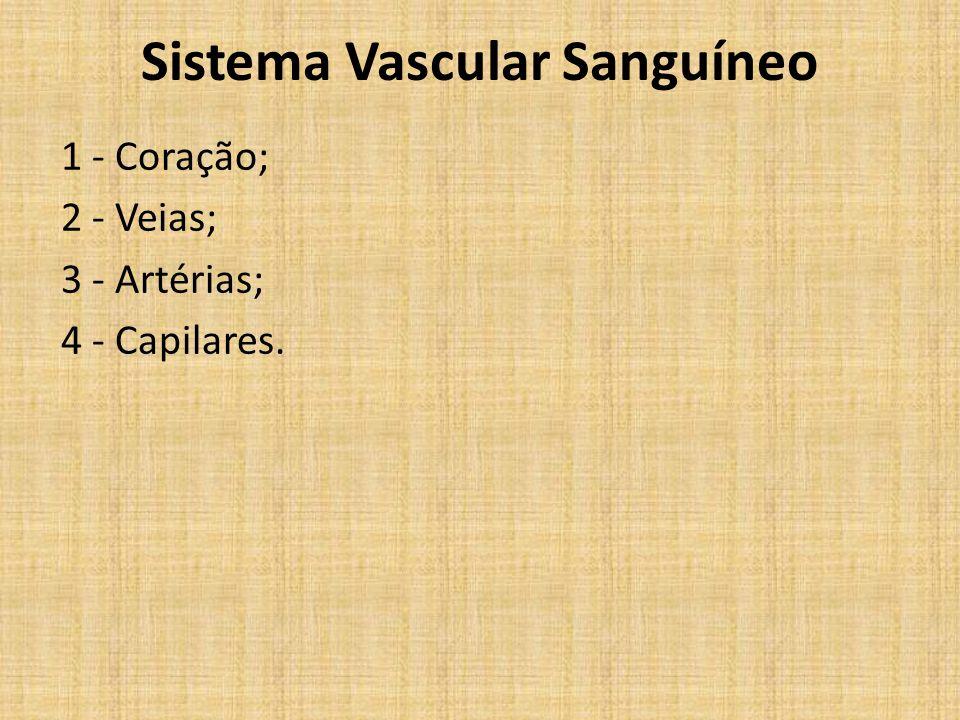 Sistema Vascular Sanguíneo