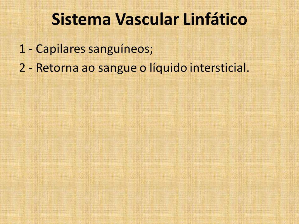 Sistema Vascular Linfático