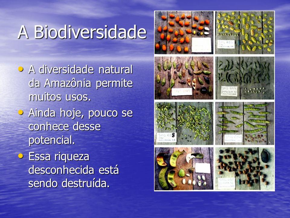 A Biodiversidade A diversidade natural da Amazônia permite muitos usos. Ainda hoje, pouco se conhece desse potencial.