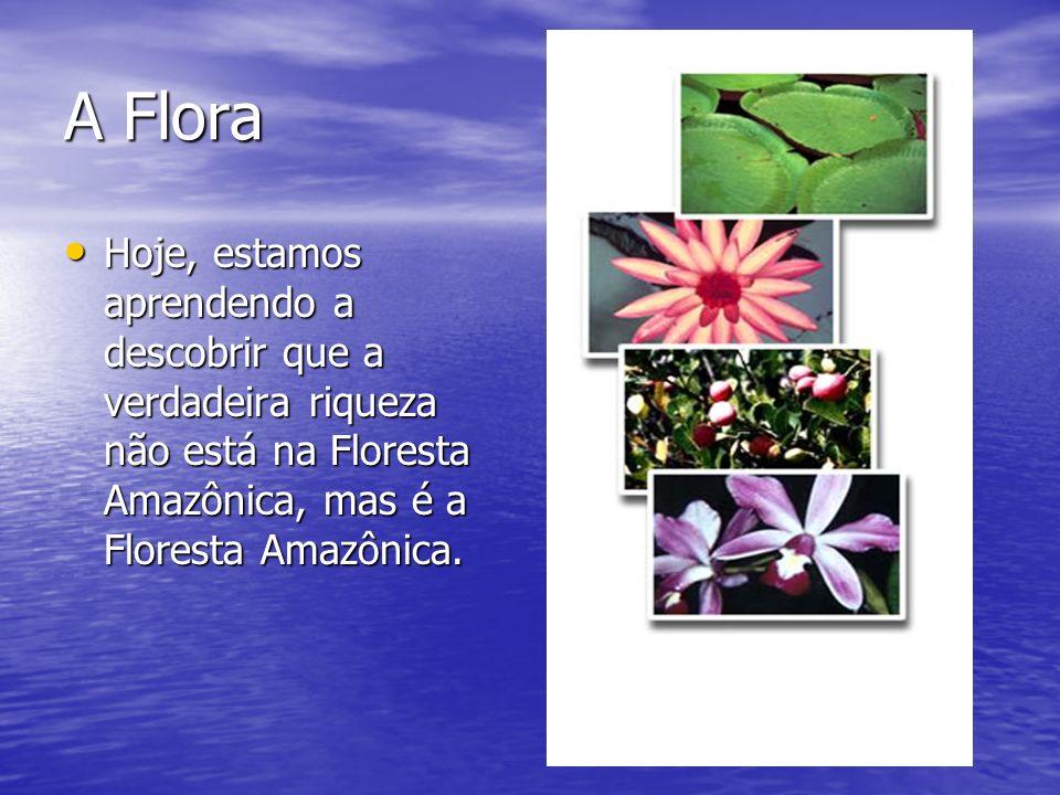 A Flora Hoje, estamos aprendendo a descobrir que a verdadeira riqueza não está na Floresta Amazônica, mas é a Floresta Amazônica.