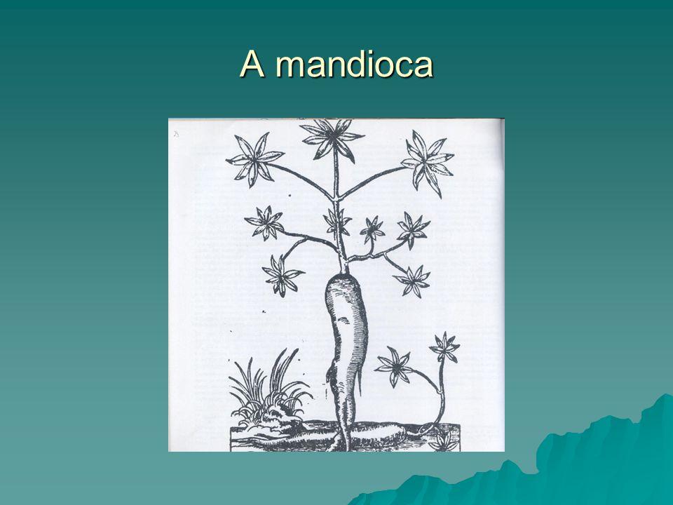 A mandioca