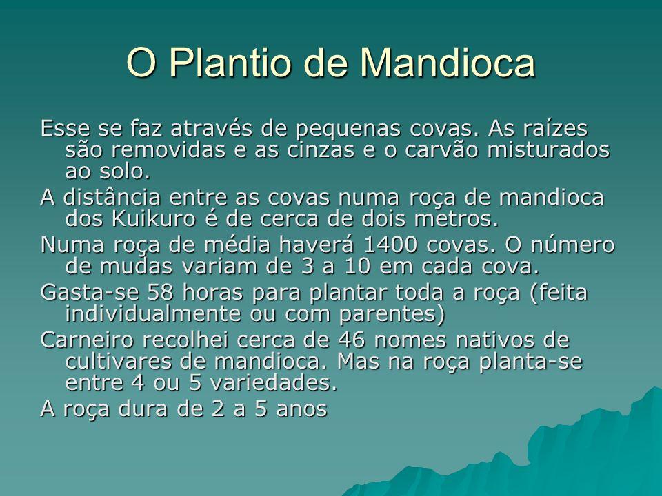 O Plantio de Mandioca Esse se faz através de pequenas covas. As raízes são removidas e as cinzas e o carvão misturados ao solo.