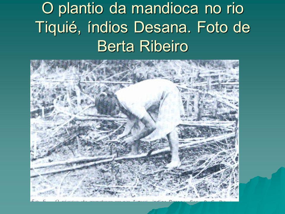 O plantio da mandioca no rio Tiquié, índios Desana