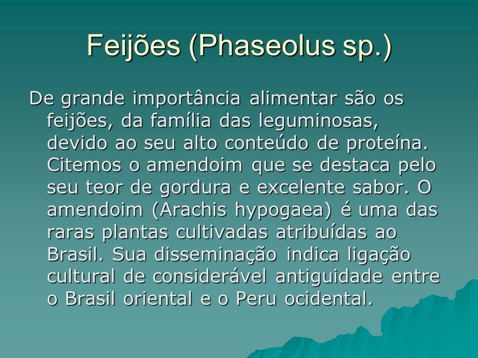 Feijões (Phaseolus sp.)
