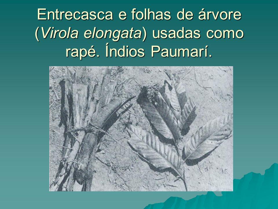 Entrecasca e folhas de árvore (Virola elongata) usadas como rapé