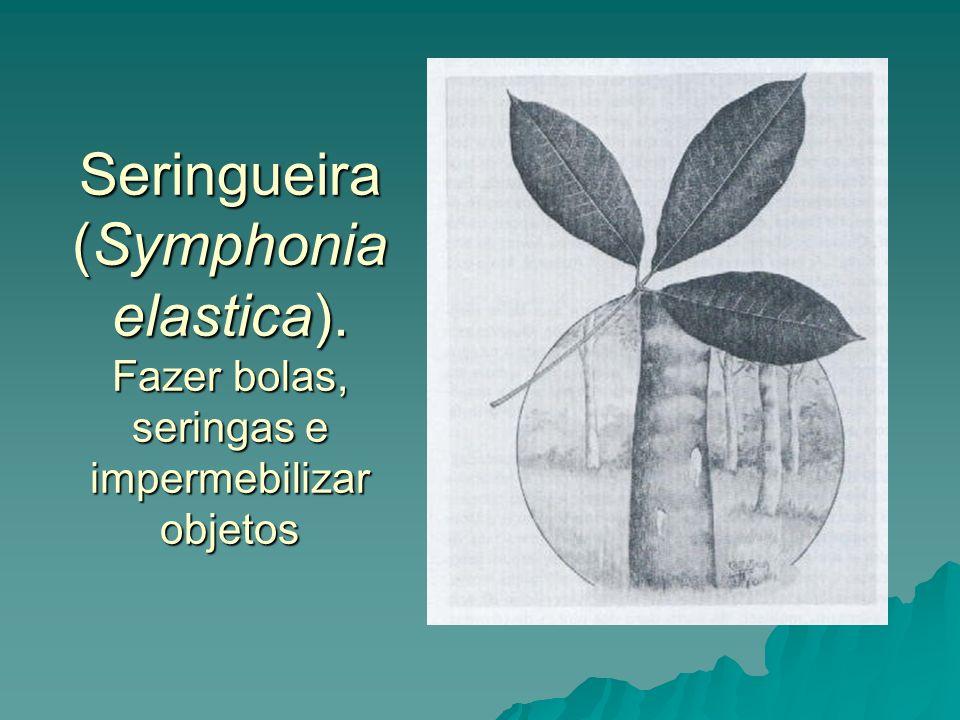 Seringueira (Symphonia elastica)