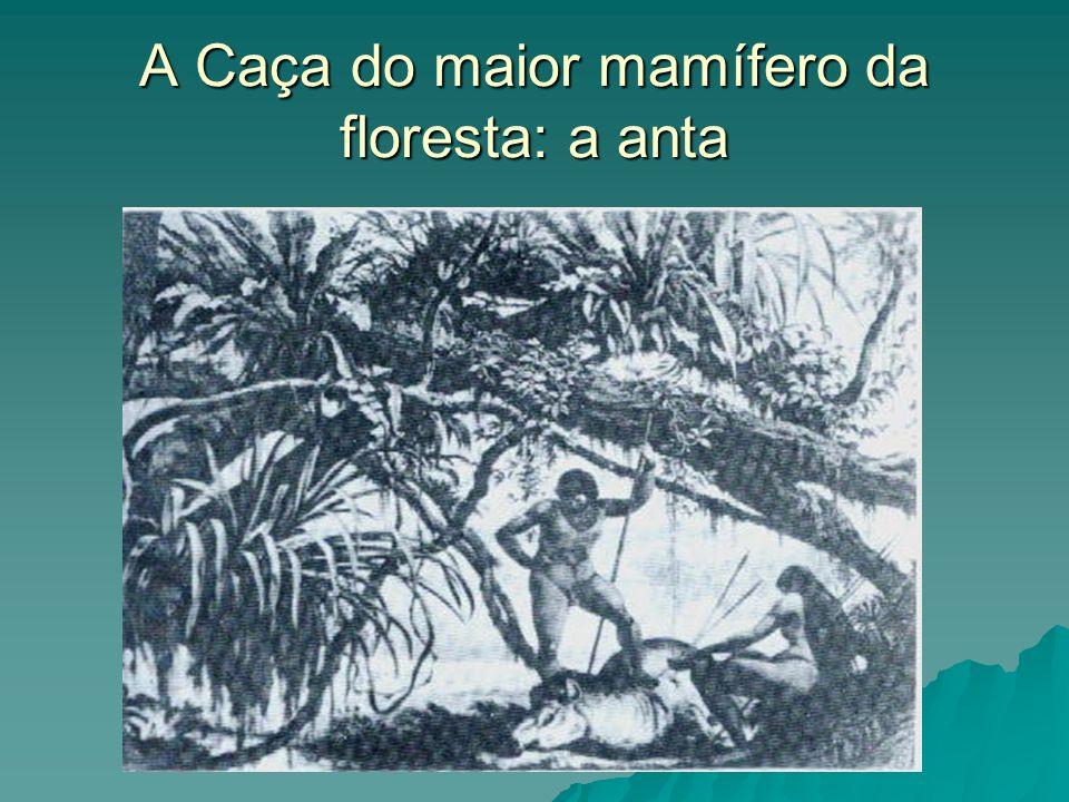 A Caça do maior mamífero da floresta: a anta