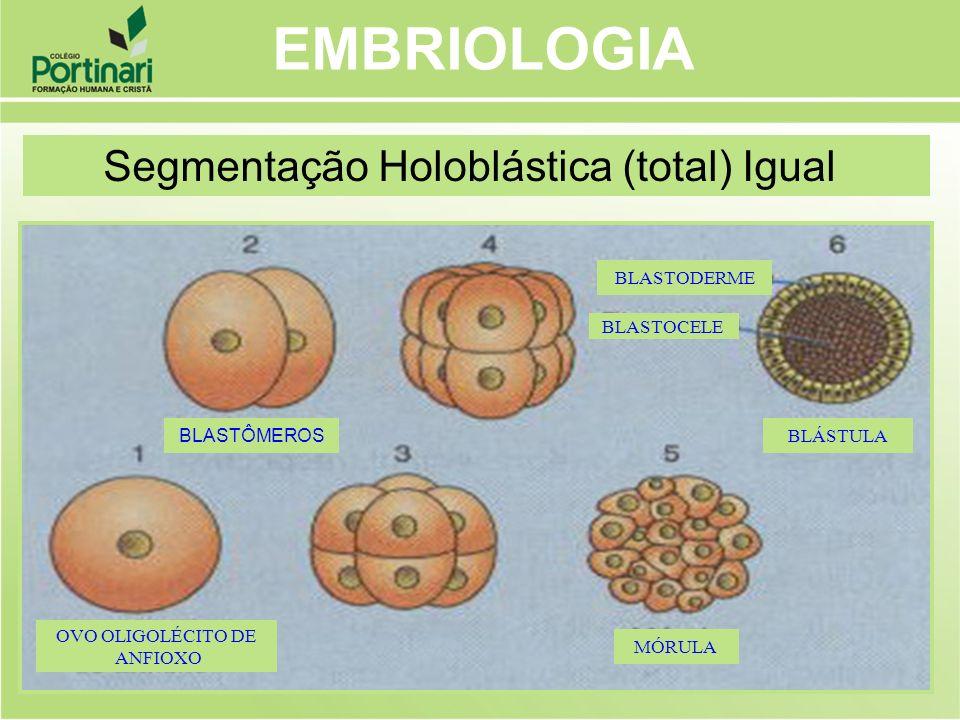 EMBRIOLOGIA Segmentação Holoblástica (total) Igual BLASTÔMEROS